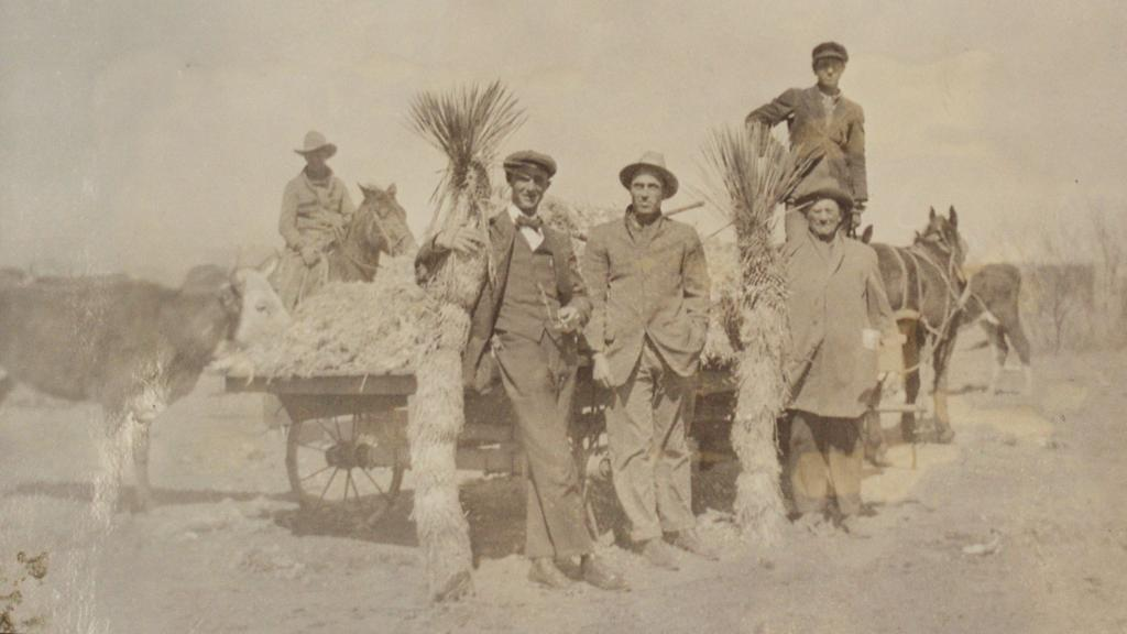 Photograph of Ernest Brooke Stanley and Unidentified Men with Yucca, 1918