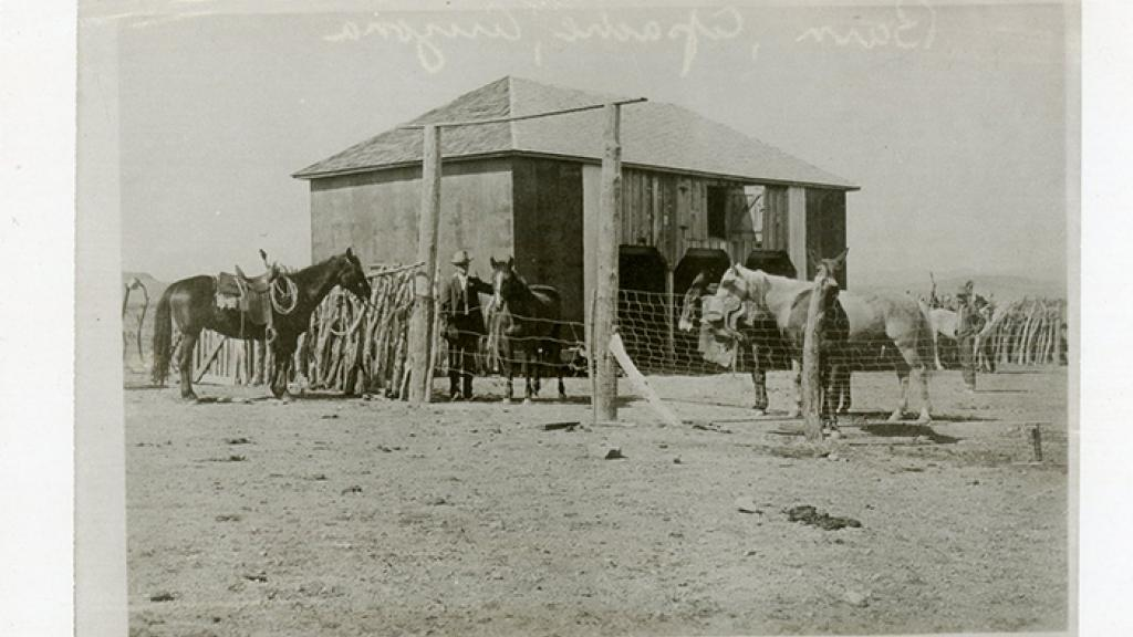 Financial Records of the San Simon Cattle Company | Special
