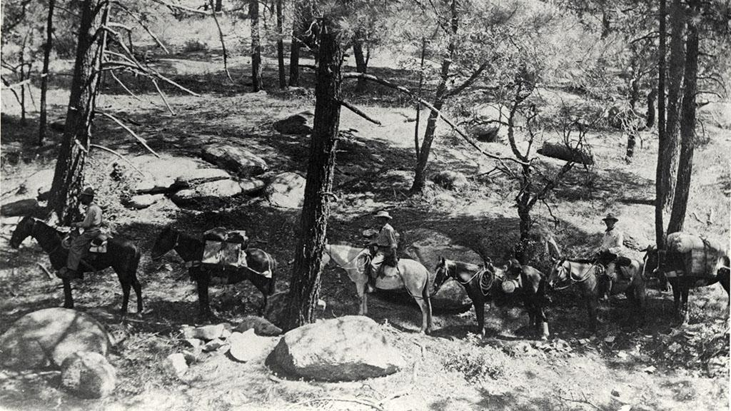 Caravan of Horses Traveling through a Forest, 1908