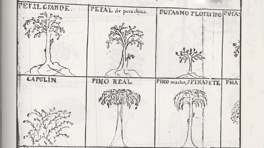 Plant Sketches, 1777