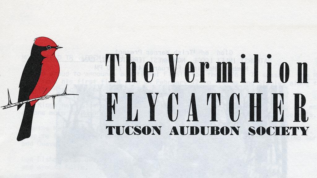 The Vermilion Flycatcher, 1977