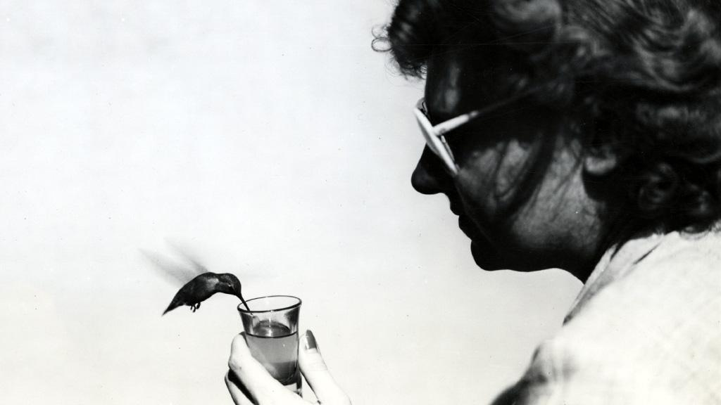 Hummingbird Drinking Syrup from Glas Held by Kitty P., undated
