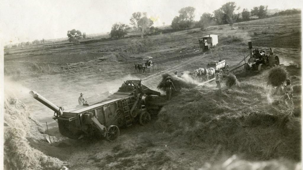 Agricultural Workers Thrashing Hay