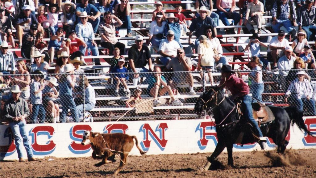 Rodeo Cowboy Roping a Calf