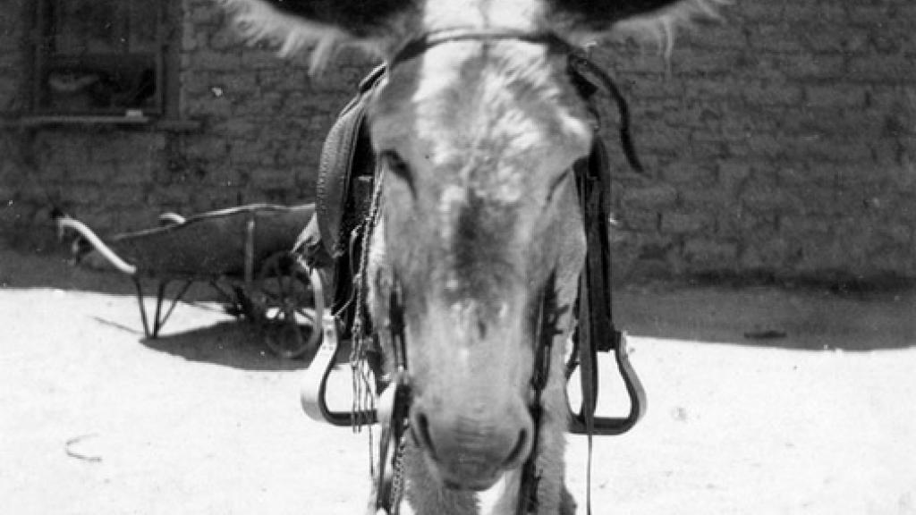 Photo of Horse
