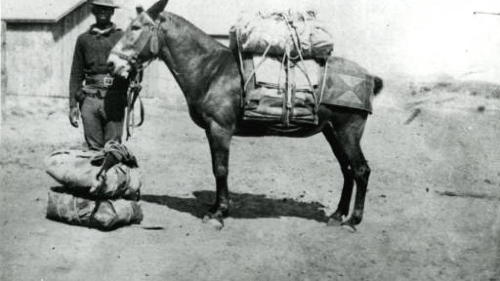 Photo titled Army pack mule