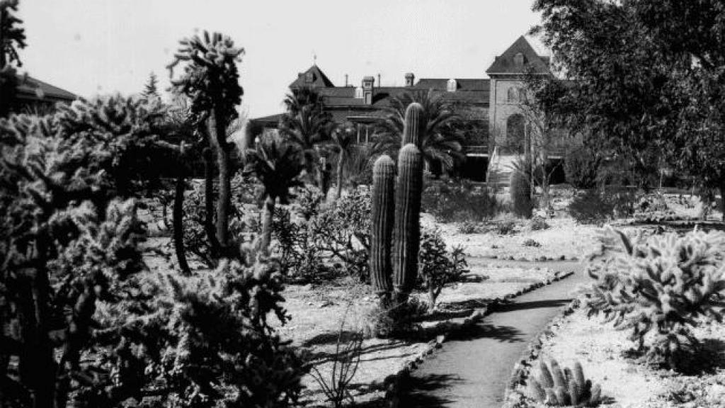Old Main Cactus Garden
