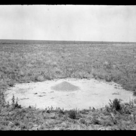Ant hill photograph from 1916